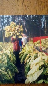 My dad Armando working in a tobacco field
